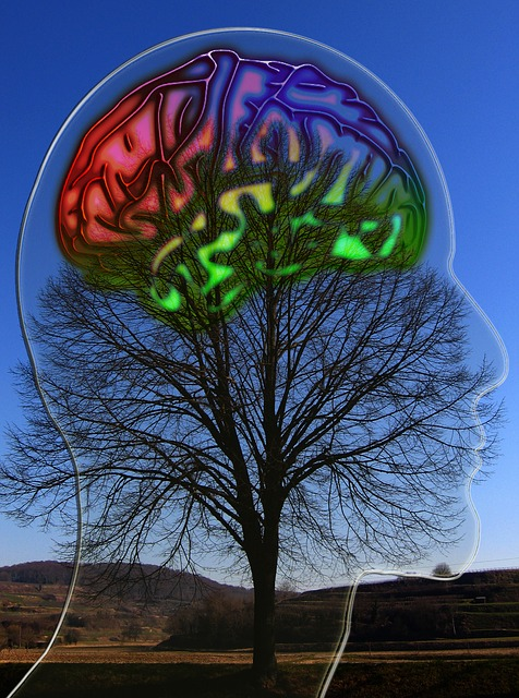 Image of Brain as on tree represents idea of brain as multi system organism that builds willpower to think positive